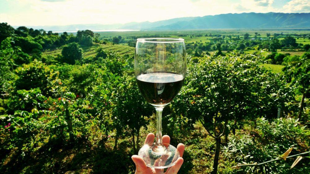 Cata de Vinos en Castellon
